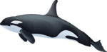 Killer Whale PNG Image icon png
