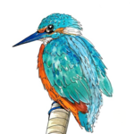 Kingfisher PNG Transparent Picture icon png