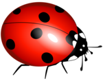Ladybird PNG Picture icon png