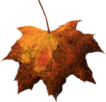 Leaf PNG Picture icon png