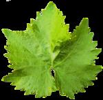 Leaf PNG Transparent Image icon png