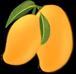 Mango Transparent PNG icon png