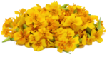 Marigold PNG File icon png