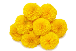 Marigold Transparent Background icon png