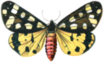 Moth PNG Image icon png
