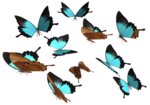 Peacock Royal Butterfly PNG icon png
