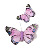 Pink Butterfly Transparent PNG icon png