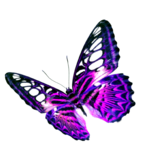 Purple Butterfly Transparent Background icon png