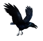 Raven Flying PNG HD icon png