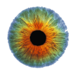 Real Eye PNG Image icon png