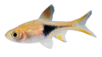 Real Fish PNG HD icon png