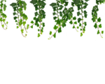 Real Leaves PNG File icon png