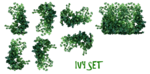 Real Leaves PNG Pic icon png