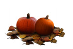 Real Pumpkin PNG Clipart icon png
