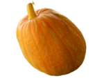 Real Pumpkin PNG Transparent Image icon png