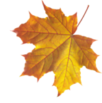 Realistic Autumn Fall Leaves PNG icon png