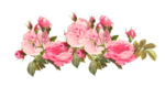 Romantic Pink Flower Border PNG Photos icon png
