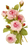 Romantic Pink Flower Border PNG Transparent icon png