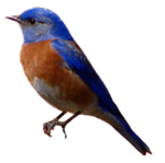 Sparrow Background PNG icon png