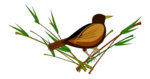Sparrow PNG Pic icon png