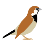 Sparrow Transparent PNG icon png