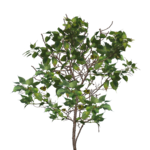 Tree Branch PNG Image icon png
