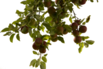 Tree Branch PNG Photos icon png