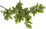 Tree Branch PNG Transparent Image icon png