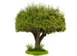 Tree PNG Image icon png