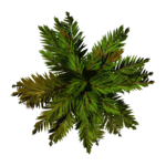 Tree Top PNG File icon png