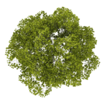 Tree Top PNG Image icon png