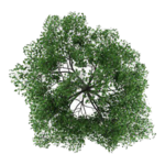 Tree Top PNG Photos icon png