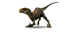 Velociraptor PNG Picture icon png