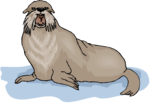 Walrus Background PNG icon png