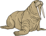 Walrus PNG Background Image icon png