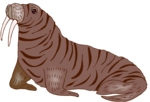 Walrus PNG Transparent HD Photo icon png