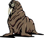 Walrus Transparent PNG icon png