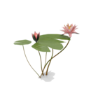 Water Lily PNG Photo icon png