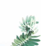 Watercolor Leaves Transparent Background icon png