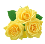 Yellow Flowers Bouquet PNG File icon png